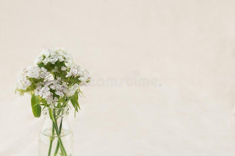 Flores dulces blancas de Guillermo en florero foto de archivo libre de regalías