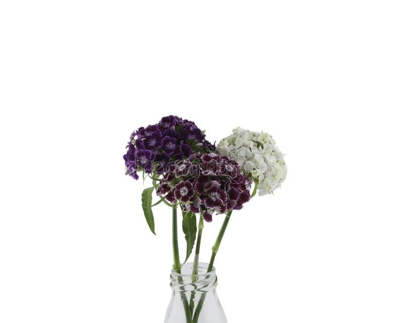 Flores dulces de Guillermo en florero fotografía de archivo libre de regalías