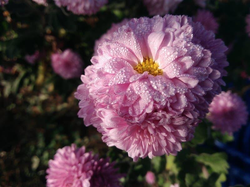 Flores dulces de la mañana imagenes de archivo