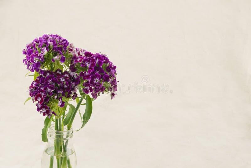 Flores dulces púrpuras de Guillermo fotos de archivo libres de regalías