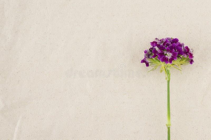 Flores dulces púrpuras de Guillermo fotografía de archivo