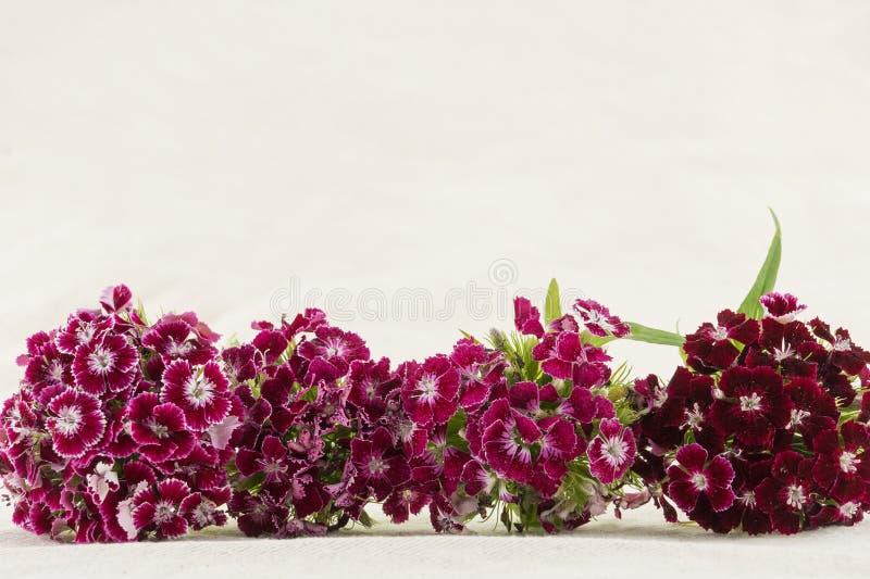 Flores dulces rojo oscuro de Guillermo imagenes de archivo