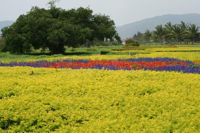 Flores e árvores imagem de stock royalty free