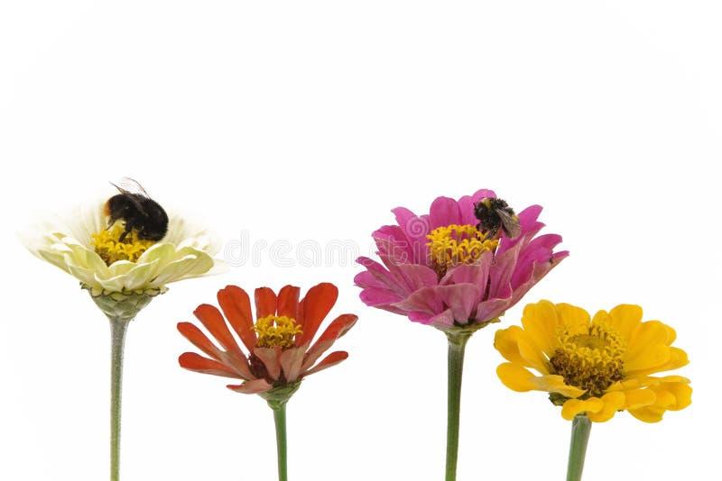 Flores e abelhas imagem de stock royalty free