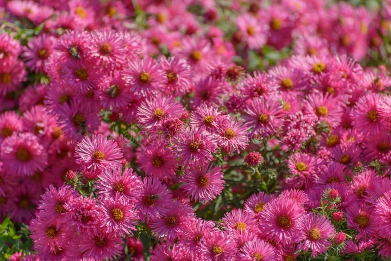 Flores e abelhas cor-de-rosa fotografia de stock