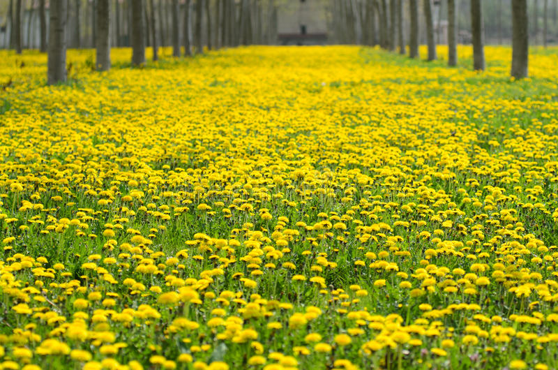 Flores e alergias respiratórias imagem de stock
