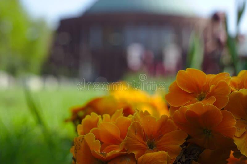 Flores e arquitetura foto de stock