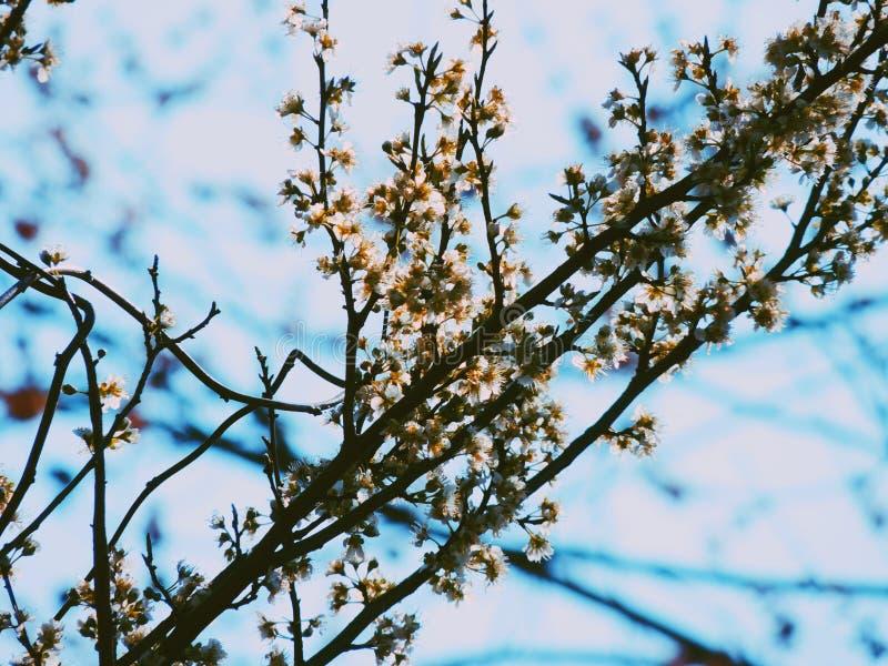 Flores e azuis imagem de stock