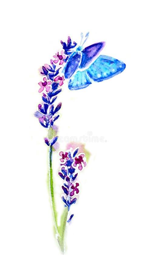 Flores e borboletas da alfazema do verão ilustração royalty free