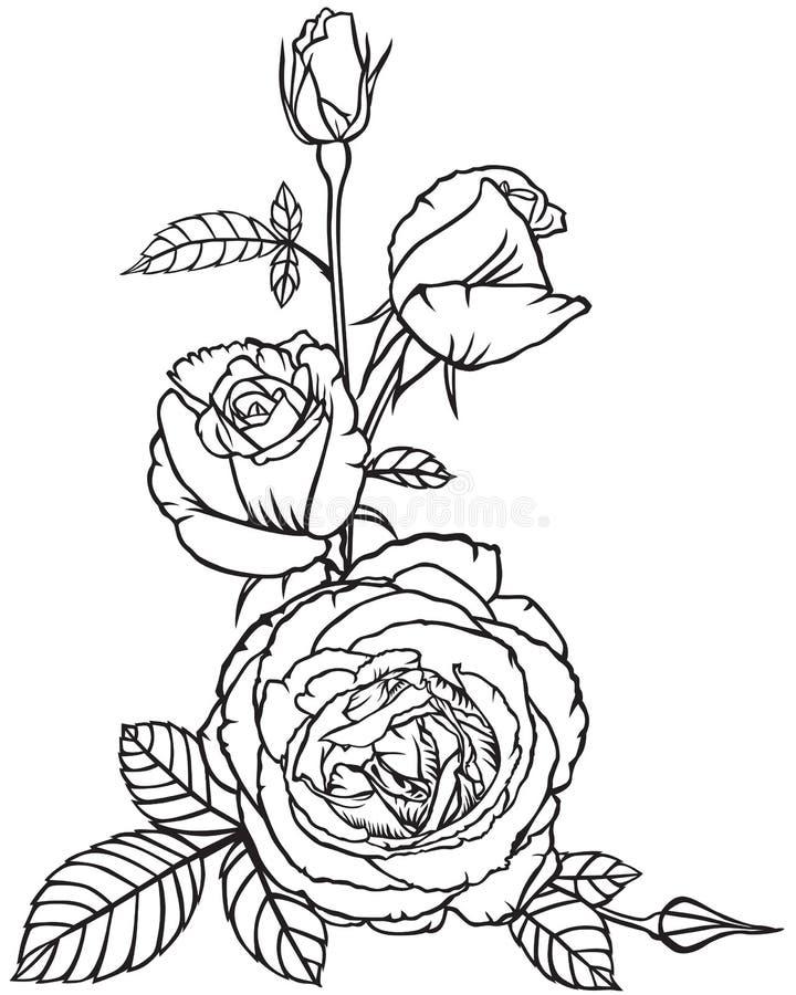 Flores e botões das rosas ilustração stock