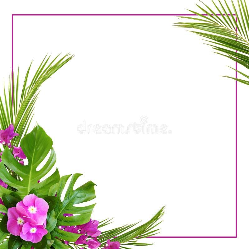 Flores e buganvília do Catharanthus com folhas de palmeira no arranjo tropical de canto com quadro imagens de stock