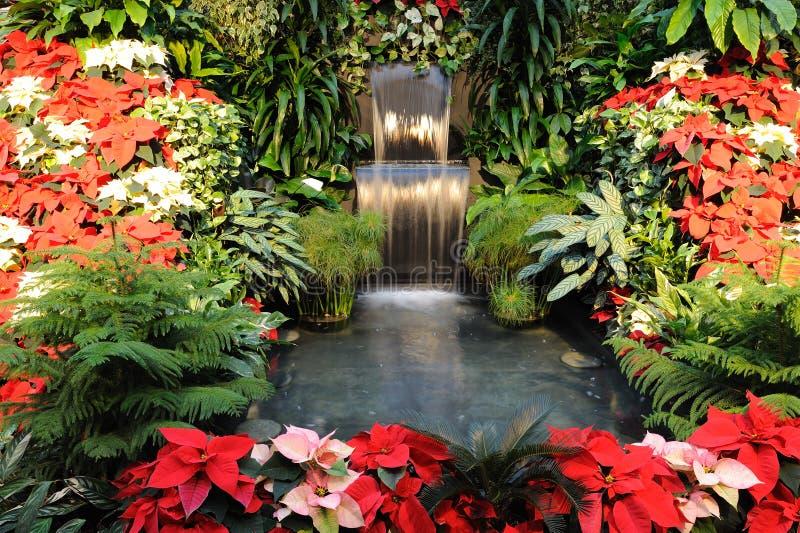 Flores e cachoeira foto de stock