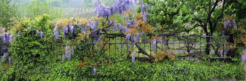 Flores e cerca do jardim imagens de stock royalty free