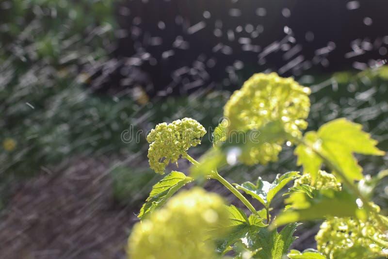 Flores e chuva fotografia de stock royalty free