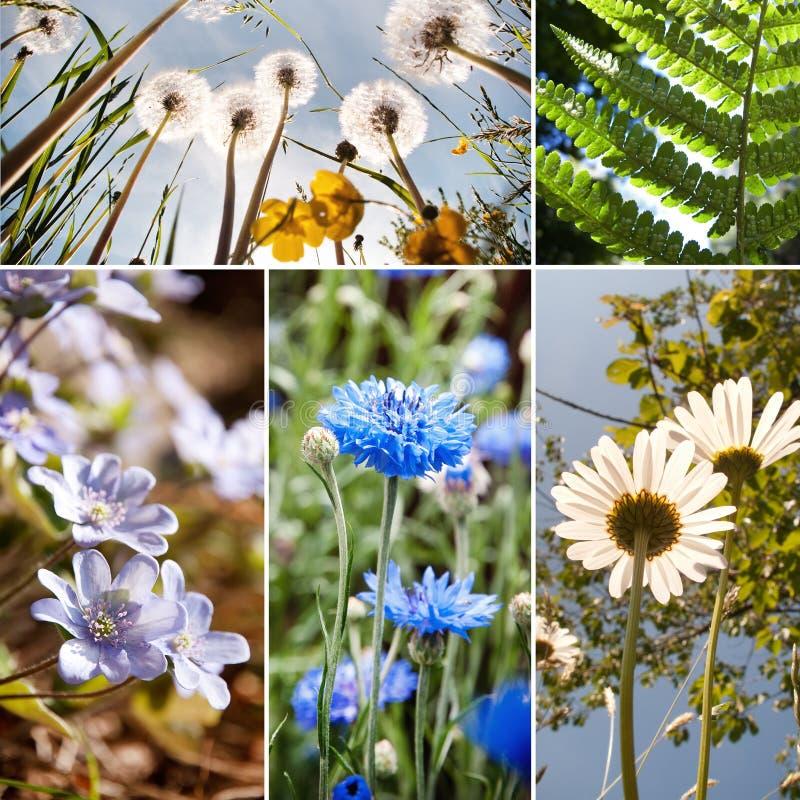 Flores e colagem das plantas imagem de stock