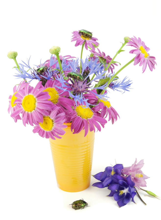 Flores e composição dos erros imagens de stock