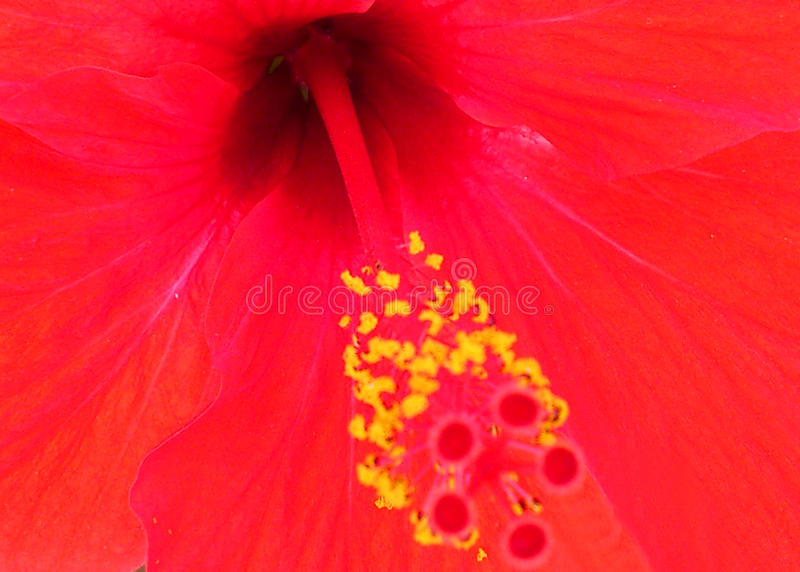 Flores e decoração imagem de stock
