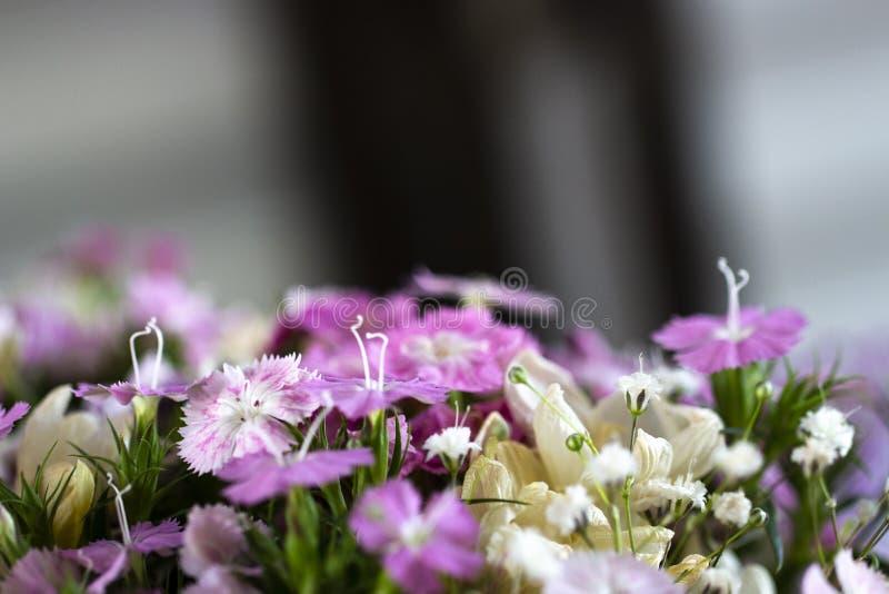 flores e detalhe da mola fotos de stock