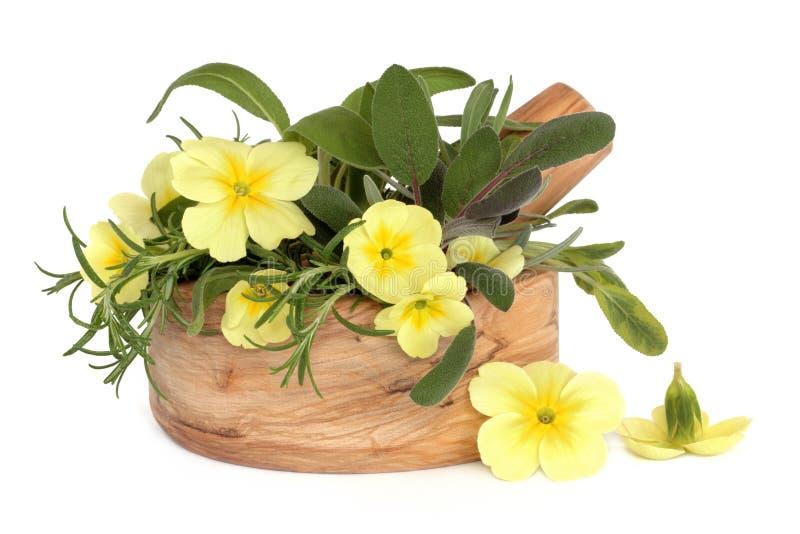 Flores e ervas do Primrose fotografia de stock
