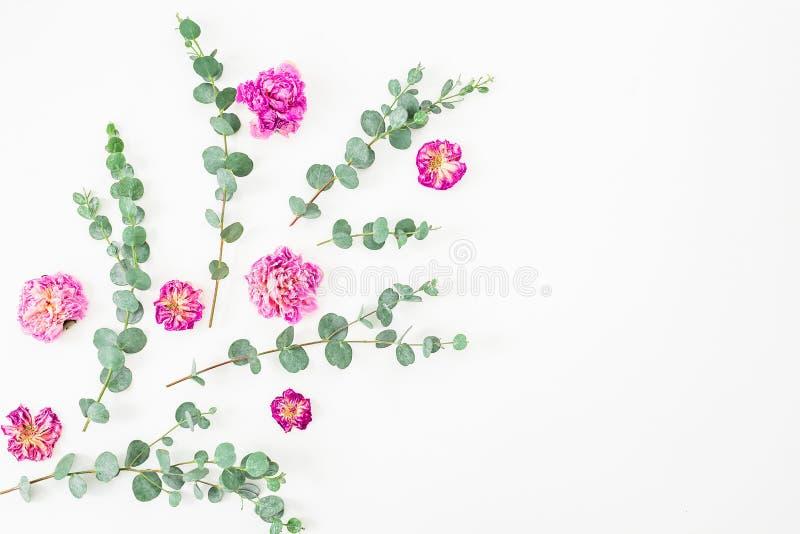 Flores e eucalipto de Rosa no fundo branco Configuração lisa, vista superior Fundo do `s do Valentim foto de stock royalty free