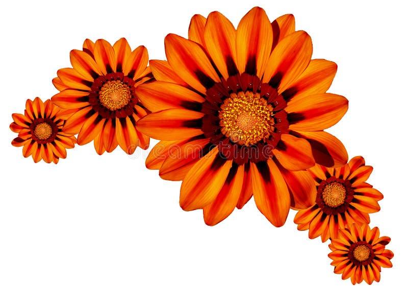 Flores e flores imagem de stock