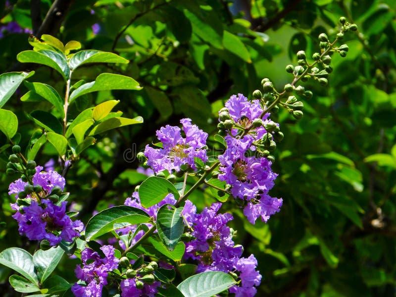 Flores e folhas fotografia de stock