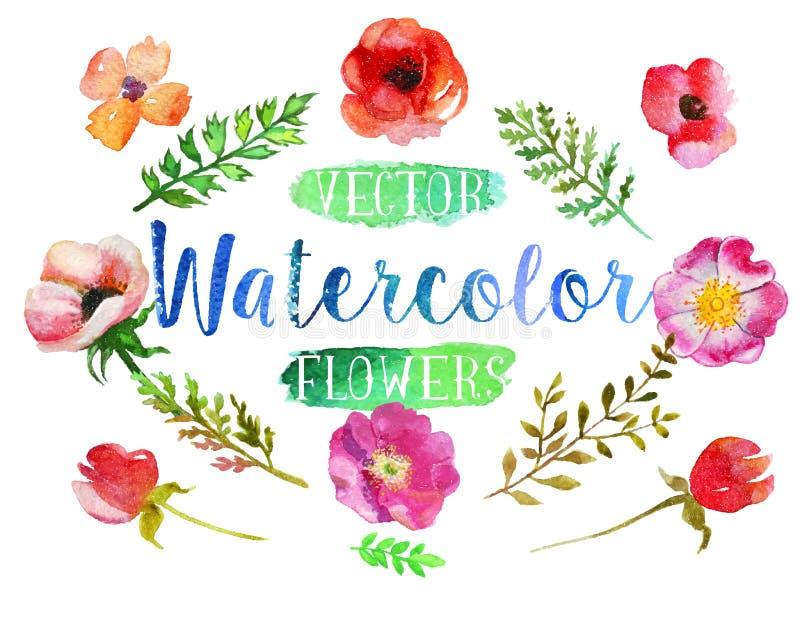 Flores e folhas do aquarelle da aquarela do vetor ilustração stock