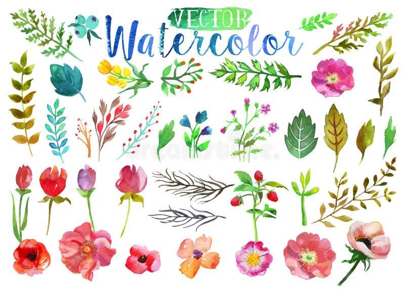 Flores e folhas do aquarelle da aquarela do vetor ilustração do vetor