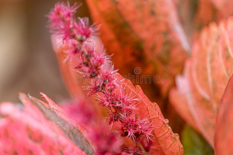Flores e folhas pequenas de plantas selvagens do campo em Uruguai imagem de stock