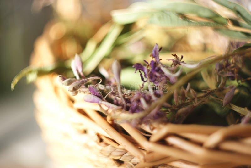 Flores e folhas secadas da mentira da salgueiro-erva em uma cesta de vime fotos de stock royalty free