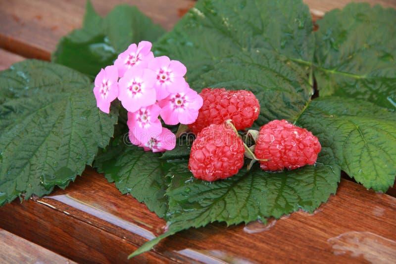 Flores e framboesas fotografia de stock royalty free
