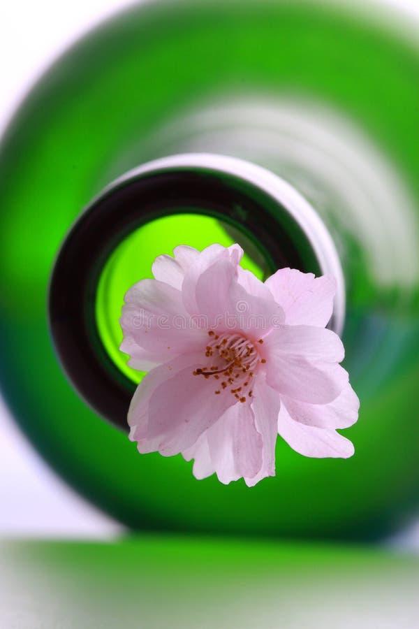 Flores e frasco de cereja fotografia de stock