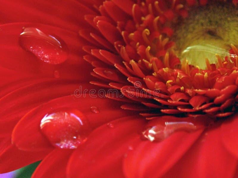 Flores e gota fotografia de stock