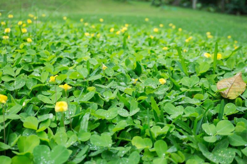 Flores e grama fotografia de stock