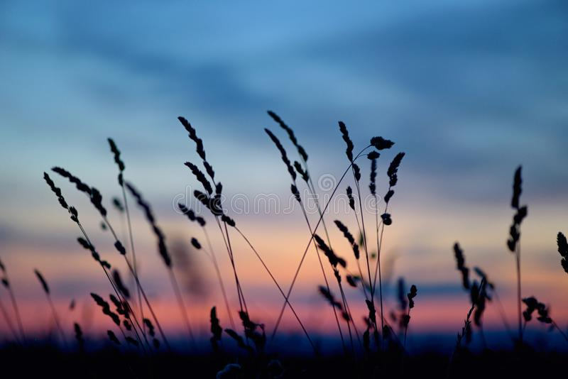 Flores e grama secadas no por do sol fotos de stock