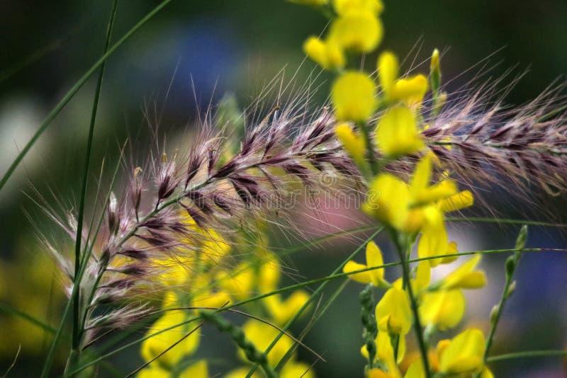 """Flores e hierba amarillas en ‰ del  del 花è del """"del æ˜¥å¤©çš de la primavera imagenes de archivo"""