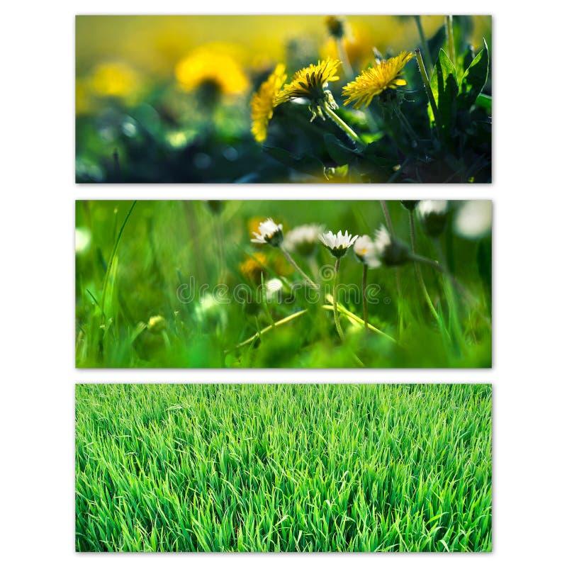 Flores e hierba de la primavera fotos de archivo libres de regalías