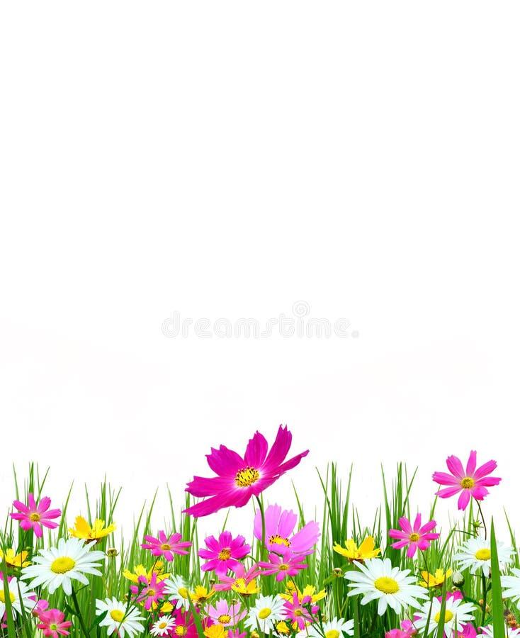 Flores e hierba del resorte imagenes de archivo
