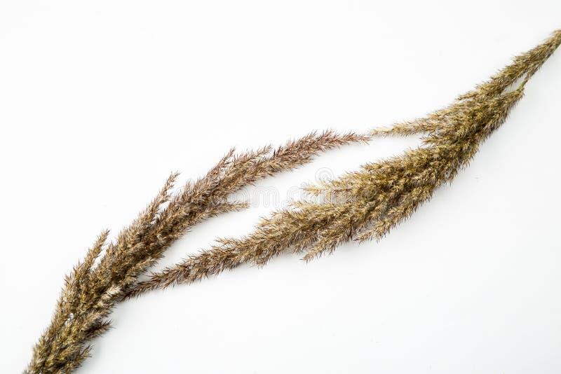 Flores e hierba secadas en un fondo blanco, composici?n puesta plana, visi?n superior foto de archivo