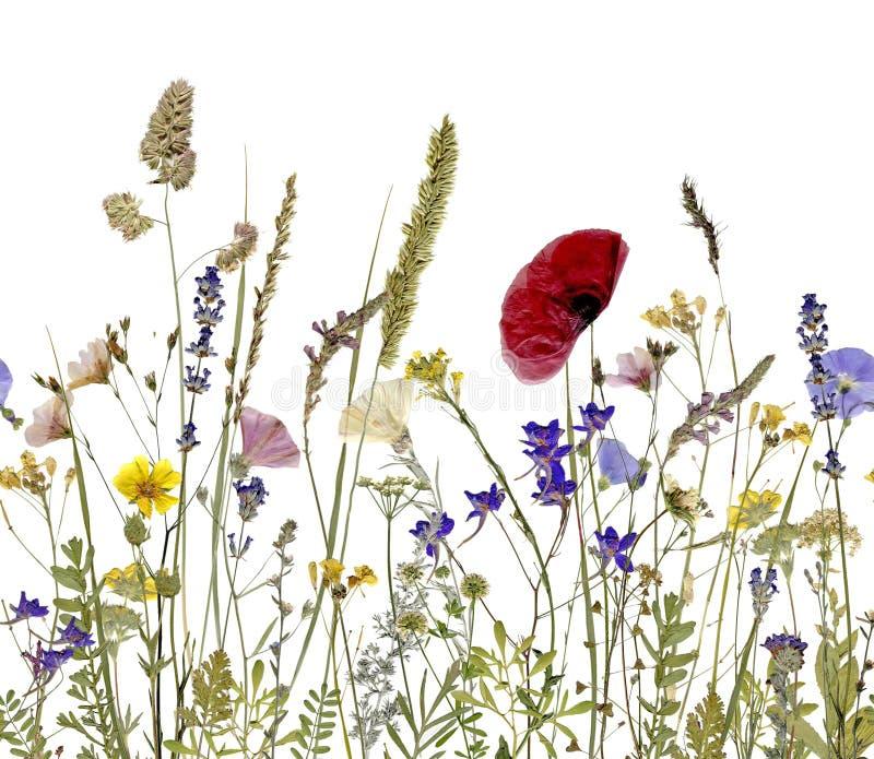 Flores e hierbas imagen de archivo