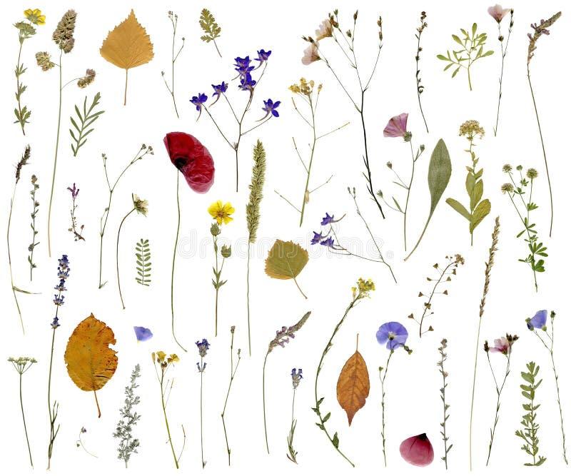 Flores e hierbas fotografía de archivo