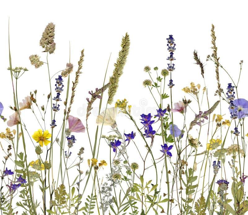 Flores e hierbas imagenes de archivo