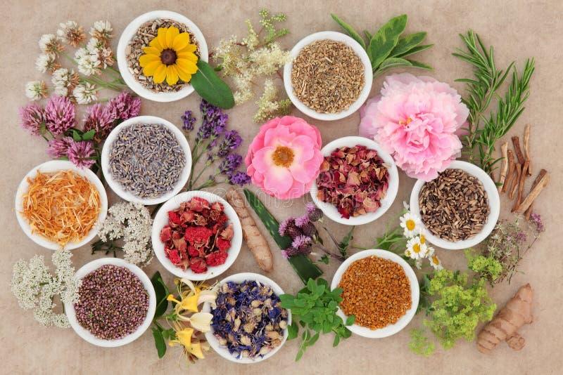 Flores e hierbas curativas foto de archivo libre de regalías