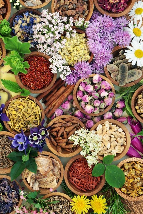 Flores e hierbas medicinales imagen de archivo