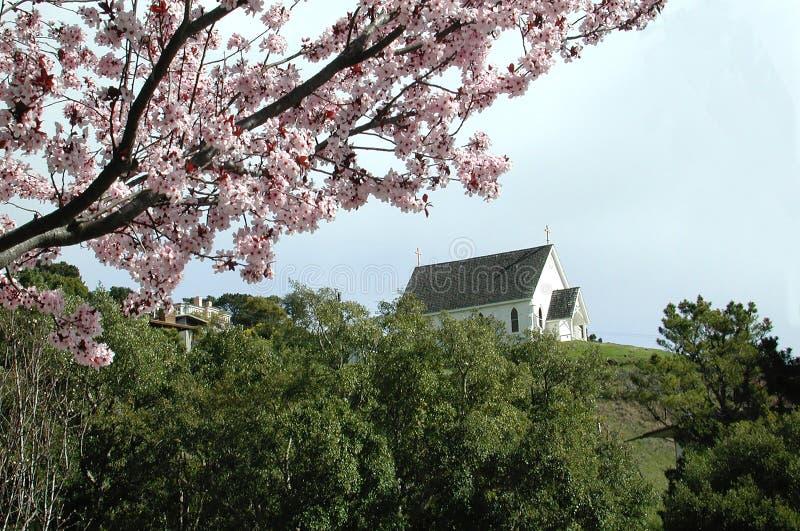 Flores e igreja da ameixa fotos de stock