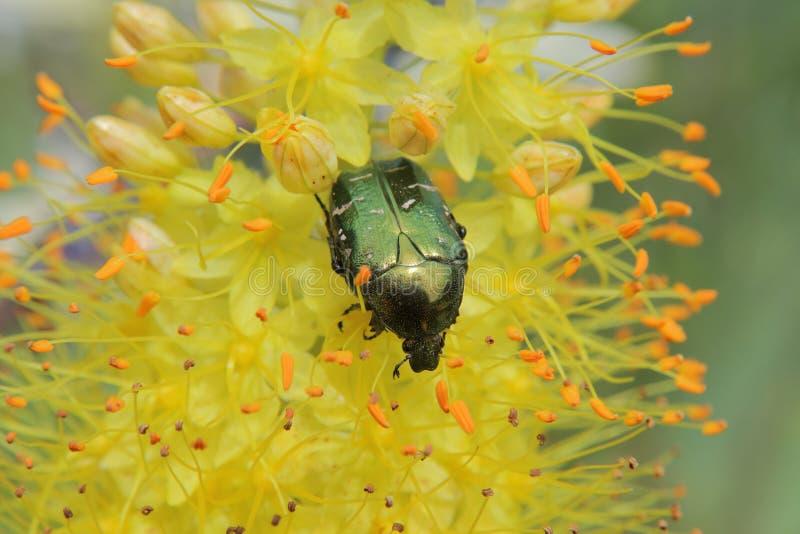 Flores e insectos foto de archivo libre de regalías