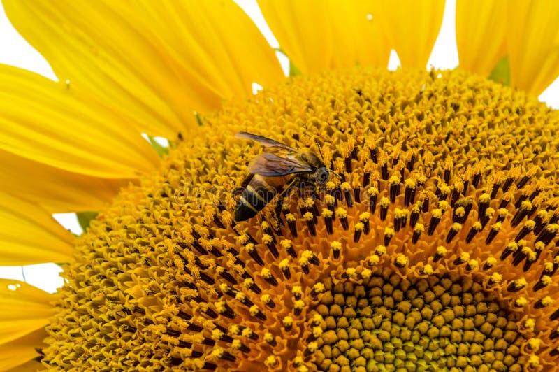 Flores e insectos fotografía de archivo libre de regalías