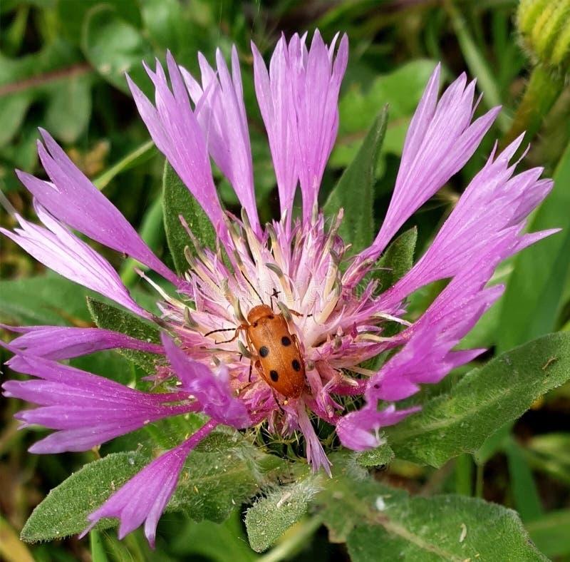 Flores e insectos vivos imagen de archivo libre de regalías