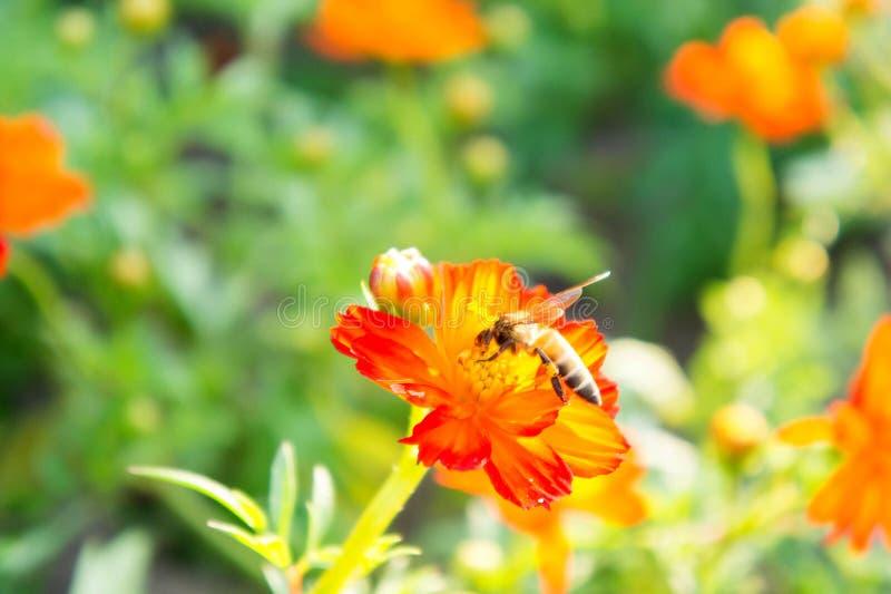Flores e insetos vermelhos no parque imagem de stock royalty free