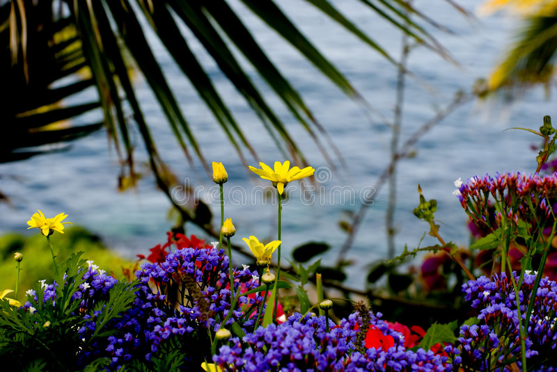Flores e mar fotografia de stock royalty free